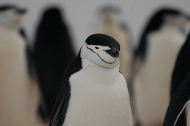 2004 - Antarctica - 218