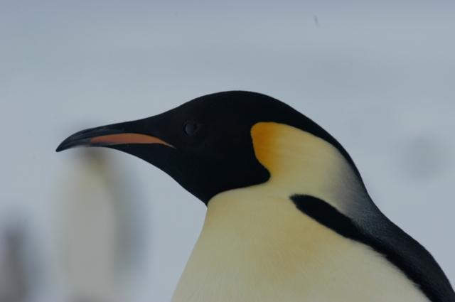 2004 - Antarctica - 343